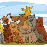 IV międzyszkolny konkurs Care for animals!!!