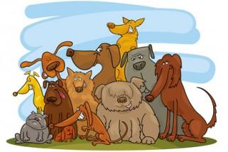 ROZSTRZYGNIĘCIE MIĘDZYSZKOLNEGO KONKURSU  'CARE FOR ANIMALS'